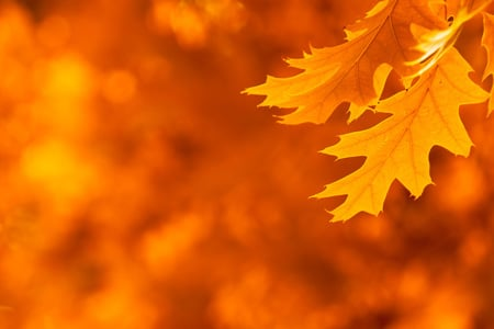 Why Fall is the Best Time For Your Next Video Production
