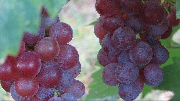 Niagara wine VQA